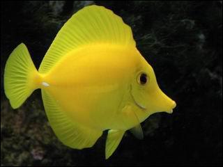 Cet animal ce nomme :