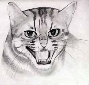 Quizz les chats dans les dessins anim s quiz dessins animes - Trop beau dessin ...