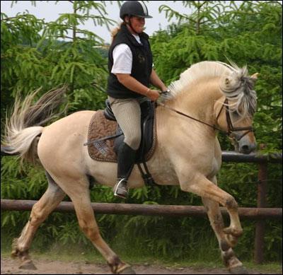 Que met-on sur le dos du cheval pour le monter ?