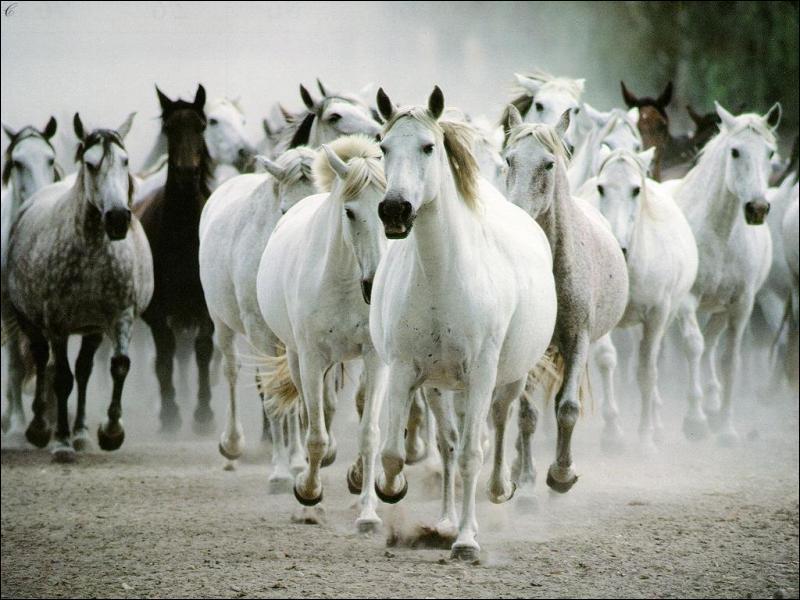 De quelle famille sont les chevaux ?