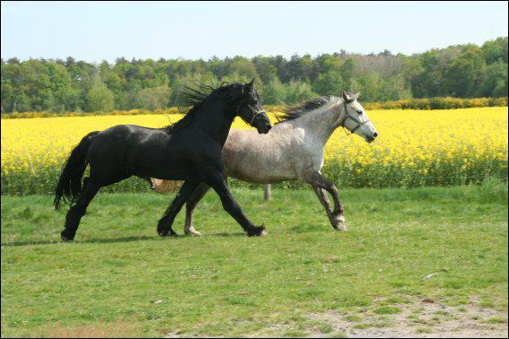 Combien d'allures le cheval a-t-il ?