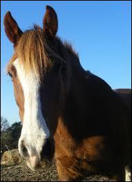 Comment appelle-t-on la trace blanche sur la tête du cheval ?