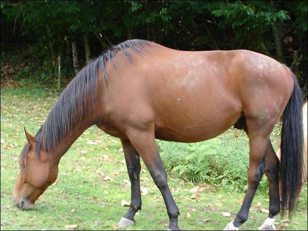 Comment s'appelle la partie du cheval juste devant son dos (où on mesure les chevaux )