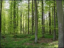 Quel est le pays d'Europe le plus boisé par rapport à sa surface ?