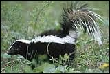 Quel est cet animal qui vit dans la forêt ?