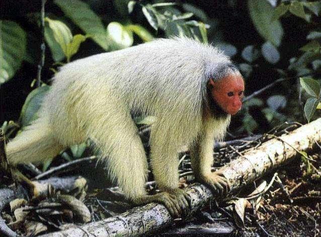 Les espèces de singes