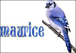 ''Maurice''