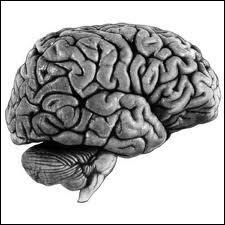 Combien y a-t-il d'hémisphère dans le cerveau ?