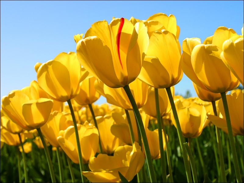 Qu'est-ce que c'est que cette fleur-là ? Paraît qu'on la trouve parfois dans les champs...