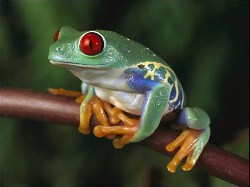 Ce petit dernier fait partie de la famille des amphibiens, comme son cousin le crapaud. Sa peau, lisse et humide, est dépourvue de poils ou d'écailles. Il peut faire des bonds énormes. J'ai nommé :