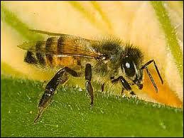 Qui est l'auteur du roman 'une abeille contre la vitre' ?