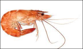 Quel est cet animal que l'on peut trouver dans une poissonnerie ?