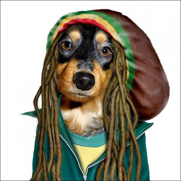 C'est le maître du reggae :