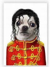 Nos animaux de compagnie déguisés en rock stars