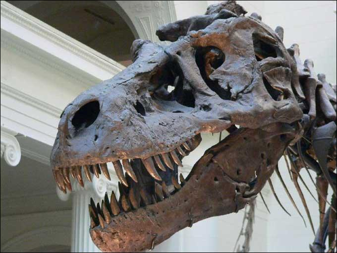 A quel Période appartenait le Tyrannosaure ?
