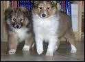 Combien de petits la chienne peut-elle avoir ?