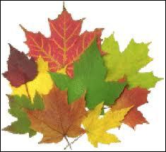 Cette feuille est aussi l'emblême d'un grand pays. A quel arbre appartient-elle ?