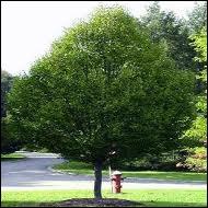 quizz mon herbier quiz arbres fruits. Black Bedroom Furniture Sets. Home Design Ideas