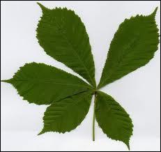 Quizz mon herbier quiz arbres fruits - Comment s appelle l arbre du kaki ...