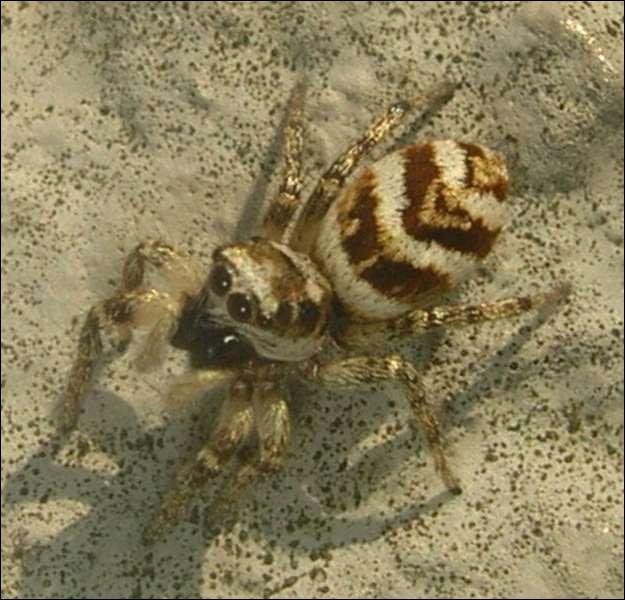 Quelle est cette araignée ?