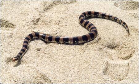 Quel est ce serpent ?