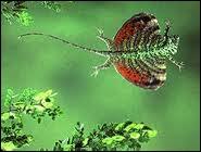 Hôte des forêts tropicales d'Asie, le dragon volant, seul lézard pouvant voler, peut bondir d'arbre en arbre sur une distance maximale de...