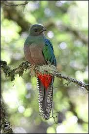 Le quetzal, petit oiseau d'Amérique considéré comme l'un des plus beaux du monde, était l'animal sacré des...