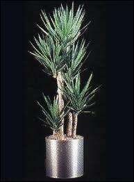 Quelle est cette plante ?