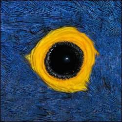 A qui est cet oeil ?