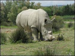 Cet animal est un :
