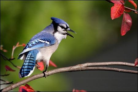 Comment s'appelle ce vertébré qui a des plumes ?