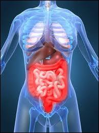 En médecine c'est le spécialiste du tube digestif :