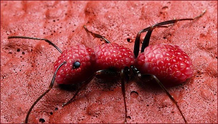 Quel animal et quels fruits voyez-vous sur cette image ? ( Pour zoomer, cliquez sur la photo )