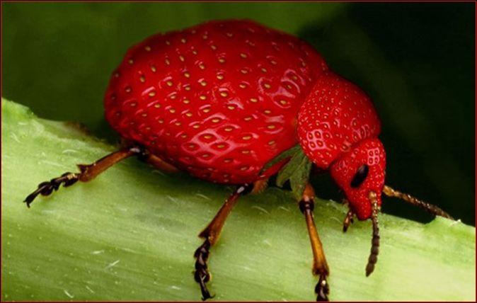 Quel animal et quels fruits voyez-vous sur cette image ?
