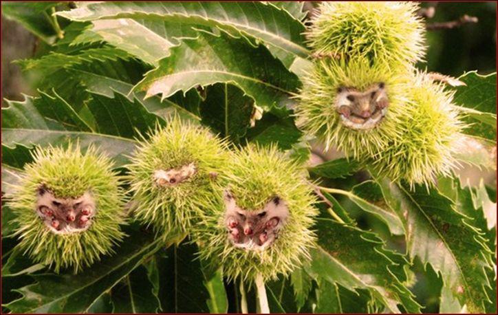 Quels animaux et quels fruits voyez-vous sur cette image ? ( N'oubliez pas que vous pouvez zoomer la photo en cliquant dessus )