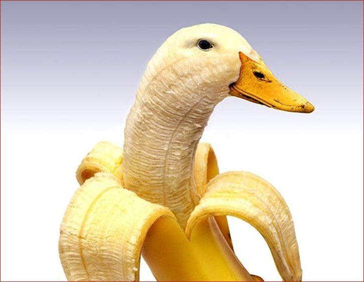 Photos drôles : les animaux-fruits
