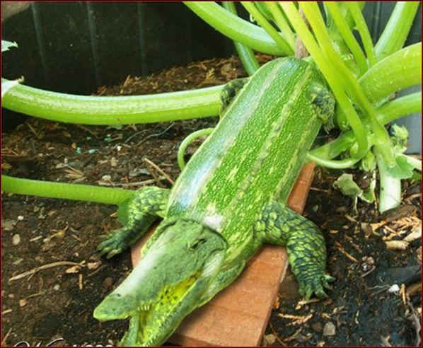 Quel animal et quel légume voyez-vous sur cette image ? (Pour zoomer, cliquez sur la photo)