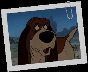 Comment s'appelle ce basset, le second membre de la bande du chien précédent (de Saint-Hubert) ?