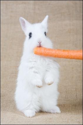 Le lapin commun, autrefois était classé dans la catégorie des ... :