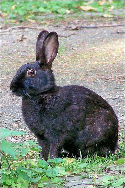 Le champ de vision de chaque oeil du lapin est de ... :