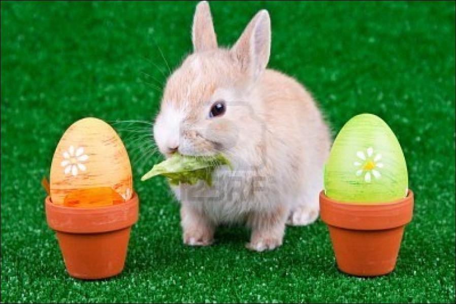 Le lapin préfère les aliments ... :
