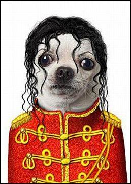 Il paraît que ce chien s'est fait refaire le nez...