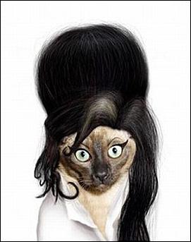 De qui est fan cette chatte ?