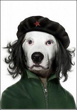 Ce chien a fait la révolution autour de sa niche !