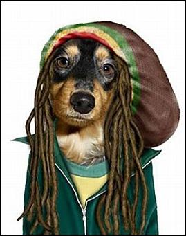 Ce chien est cool, man !