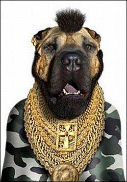 Ce chien sait se faire respecter !
