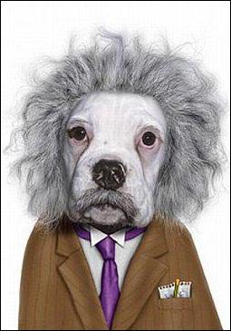 Certainement le chien le plus intelligent de ce quizz...