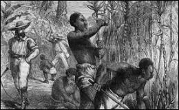 Dans les plantations des Antilles, dans quel type de culture les esclaves étaient-ils forcés de travailler le plus souvent ?