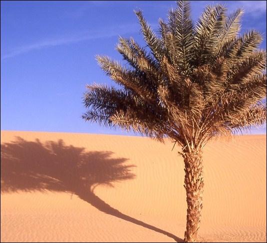 ____________, la zone désertique PROGRESSE en Afrique.