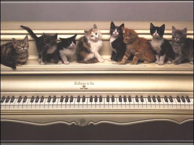 Quelle est la durée de vie moyenne d'un chat ?